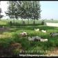 河北新乐市冠源香猪养殖基地供应大量优质巴马香猪种猪