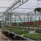 潮汐式灌溉苗床-活动苗床-花架床价格