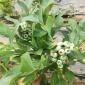 都克蓝莓苗成活率高根系发达易成活都克蓝莓苗